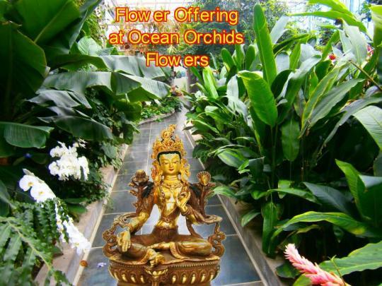 Flower Offering 2