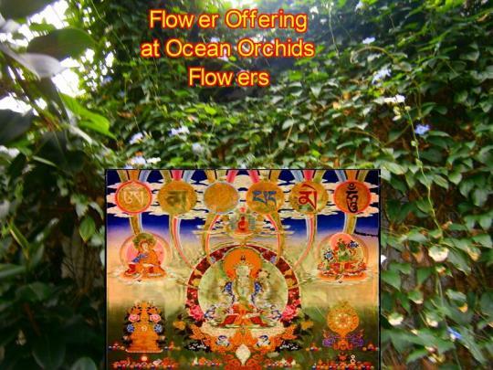 Flower Offering 3