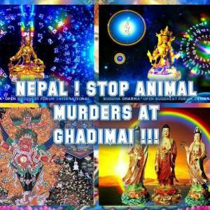 Nepal stop animal sacrifice
